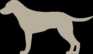 NARUMED Hund
